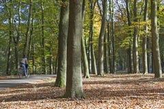 自行车的女孩在Doorn附近的秋天森林里在荷兰 免版税库存照片