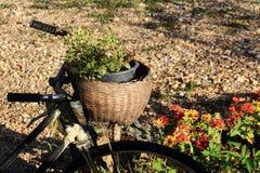 自行车篮子包含小树 免版税库存图片