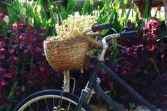自行车篮子包含小树 库存照片
