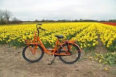自行车调遣花荷兰桔子 图库摄影
