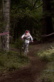 自行车赛-下坡在森林里 库存图片