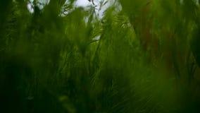 自行车车轮夏天绿草 影视素材