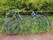 自行车长满与常春藤 免版税库存图片