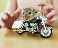 自行车骑马啮齿目动物 免版税图库摄影