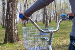 自行车,在桦树树丛里 图库摄影