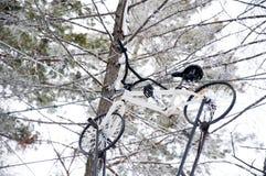 自行车 上升在树 在高度的吸引力 冬天戏剧和乐趣 免版税图库摄影