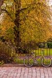 自行车cyle在秋天 库存照片