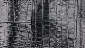 自转,自然鳄鱼皮肤结构的特写镜头  股票视频
