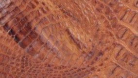 自转,自然鳄鱼皮肤结构的特写镜头  股票录像
