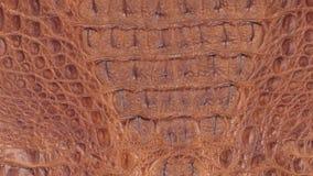 自转,自然鳄鱼皮肤,可以使用作为背景和纹理 影视素材