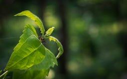 臭虫坐一片绿色叶子 图库摄影