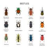 臭虫导航在平的样式设计的集合 另外种类甲虫昆虫种类象汇集 库存图片