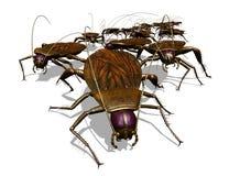 臭虫蟑螂入侵s视图 免版税库存图片