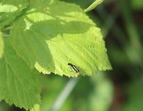 臭虫,多彩多姿,小,绿色,黑,橙色,外面 免版税库存图片