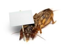 臭虫-蝼蛄-拿着空白的标志 免版税库存照片
