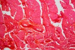 舌头细胞在显微镜下 库存照片