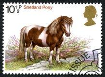 舍特兰群岛小马英国邮票 库存照片