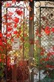 舒展在铁篱芭下的五颜六色的秋天树藤 免版税库存照片