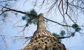 舒展对天空的一棵大树 免版税库存照片