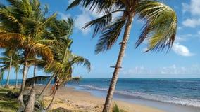 舒展海滩在波多黎各 免版税库存图片