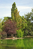 舒适池塘 库存照片