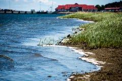 舒适的海滩有岩石和绿色vegetat的波罗的海 库存图片