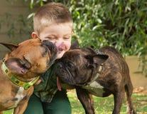 舔一个小男孩的狗 免版税图库摄影