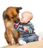 舔一个逗人喜爱的婴孩的狗 免版税库存图片