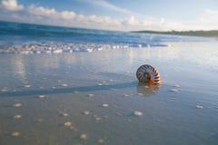 舡鱼在海波浪的海壳 库存照片