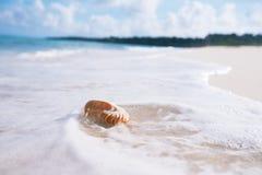 舡鱼在海波浪的海壳 库存图片