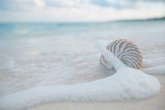舡鱼壳在海挥动,实况活动 库存图片