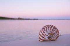 舡鱼壳在海,日出,黑暗的桃红色光 免版税库存照片