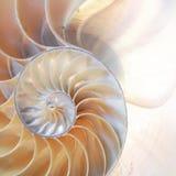 舡鱼壳对称斐波那奇半短剖面螺旋金黄比率结构成长关闭后面被点燃的珍珠母关闭 免版税库存照片