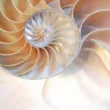 舡鱼壳对称斐波那奇半短剖面螺旋金黄比率结构成长关闭后面被点燃的珍珠母关闭 免版税库存图片