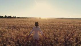 航拍女孩连续十字架在日落的麦田 慢动作,高速照相机 免版税库存图片