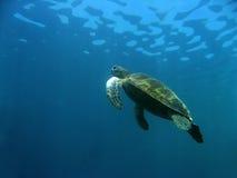 航空婆罗洲海运sipadan乌龟 图库摄影