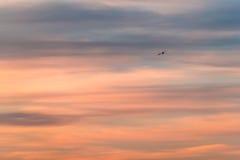 航空简单派 免版税库存图片