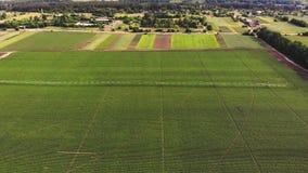 航空,顶视图,土豆在领域增长,灌溉由一种特别浇灌的枢轴洒水装置 它浇灌绿色灌木 股票录像
