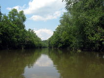 航行在河通过森林 图库摄影