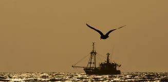 船和鸥在晚上太阳 免版税库存图片