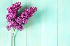 紫色丁香的枝杈在蓝色木背景的 免版税库存图片