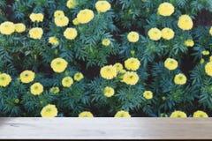 黄色万寿菊花在庭院& x28里; 迷离image& x29;选择的focu 库存图片