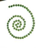 绿色三叶草螺旋在光亮背景的 免版税库存照片