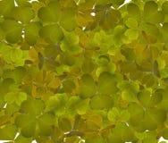 绿色三叶草离开无缝的背景 库存照片