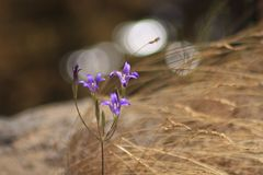 紫色三重奏 库存图片