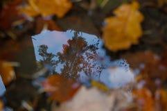 黄色下落的叶子在秋天说谎水坑的表面上 库存照片