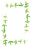绿色与卷须的分支西番莲框架被隔绝 库存照片