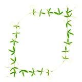 绿色与卷须的分支西番莲美好的框架是 库存图片