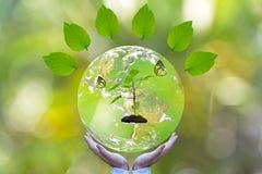 绿色世界和蝴蝶在人手上, 免版税库存图片