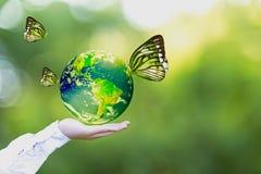 绿色世界和蝴蝶在人手,绿色背景上 免版税库存照片